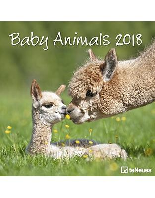 Libraria online eBookshop - Calendar Baby Animals 2018 -  - TeNeues