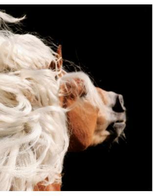 Album de arta -Cei mai frumosi cai